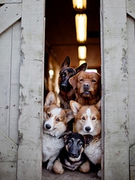 Gang of Dogs