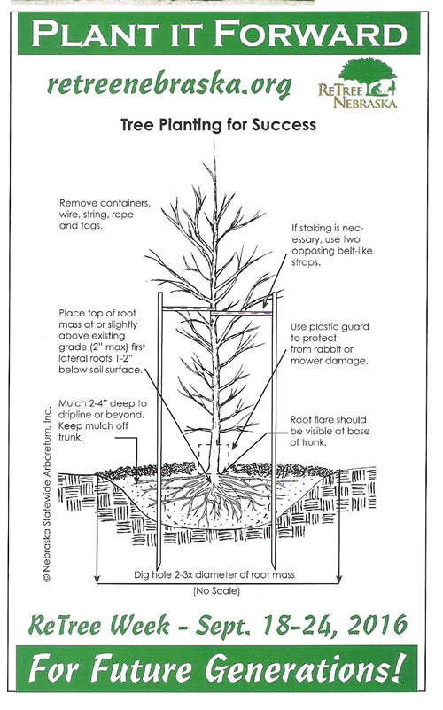 ReTree Nebraska_001_500